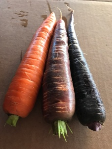tri-colored-carrots