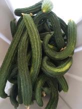 Suyo Cucumbers